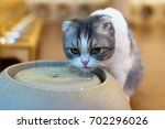 thirsty cat drink water and... | Shutterstock . vector #702296026