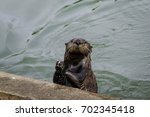 Sea Otters Are Very Clever Sea...