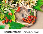 botanical background with... | Shutterstock . vector #702373762