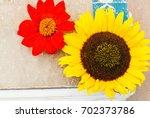 botanical background   garden... | Shutterstock . vector #702373786