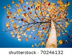 Nice Colorful Leafs On The...