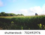 Cornfield With Blue Sky's And...