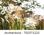 Small photo of Sunlight shining through the grass that sway to the wind.