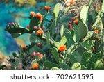 Wild Flowering Cactus In Spain