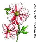 pink peony flower blossom. hand ...   Shutterstock . vector #702652192