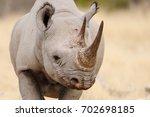 Black Rhino Head Portrait ...