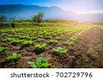 Vegetable Garden Near Mountain...