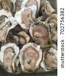 oyster for eating raw  | Shutterstock . vector #702756382