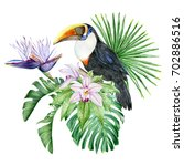 toucan  orchids  strelitzia and ... | Shutterstock . vector #702886516