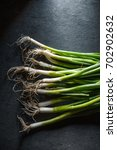 harvest of green onions in the...