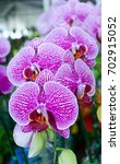 fresh orchid bouquet | Shutterstock . vector #702915052
