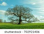 springtime oak tree in a field... | Shutterstock . vector #702921406
