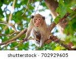Monkey On The Tree  Monkey...