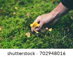 close up on hands picking fresh ...   Shutterstock . vector #702948016
