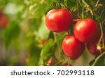 fresh ripe red tomatoes hanging ... | Shutterstock . vector #702993118