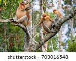 Family Of Proboscis Monkeys...