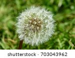 close up of a dandelion | Shutterstock . vector #703043962
