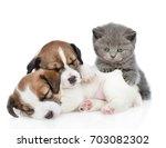 Kitten On A Group Of Sleeping...