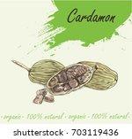 cardamon full color vector...   Shutterstock .eps vector #703119436