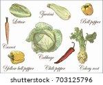 cabbage  zucchini   lettuce... | Shutterstock .eps vector #703125796