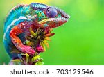 colorful lizard | Shutterstock . vector #703129546