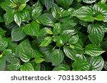 leaf background  green leaf ... | Shutterstock . vector #703130455