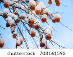 Snow Covered Fruit