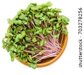 china rose radish sprouts in... | Shutterstock . vector #703278256