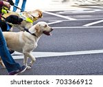 guide dog. people walking with ... | Shutterstock . vector #703366912