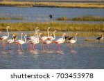 greater and lesser flamingos in ... | Shutterstock . vector #703453978