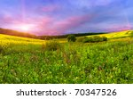 Colorful Blossom Field In The...