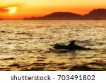 dolphins at sunset in liguria... | Shutterstock . vector #703491802