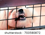 Small photo of Abusive abuse of animals concept.