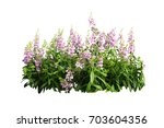 pulple flower bush tree... | Shutterstock . vector #703604356
