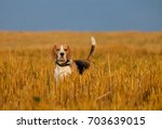 dog portrait beagle on the... | Shutterstock . vector #703639015