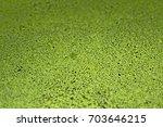 wolffia globosa  a species of... | Shutterstock . vector #703646215