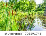 pond and cattails in summer in... | Shutterstock . vector #703691746