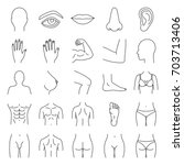 human body parts linear icons... | Shutterstock .eps vector #703713406