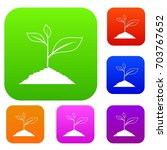 growing plant set icon in...   Shutterstock .eps vector #703767652