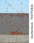 Small photo of Firebug, Blunt blacksmith (Pyrrhocoris apterus), invasion nymph of bugs on the building wall