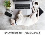 Stock photo cat pet sleep on work desk 703803415