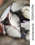 Small photo of feeder fishing catch