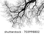 Leafless Tree On White...