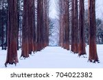 nami island in korea row of... | Shutterstock . vector #704022382