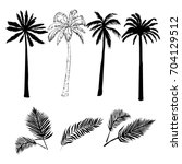 palm tree  sketch  vector ... | Shutterstock .eps vector #704129512