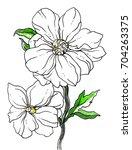 white peony flower blossom.... | Shutterstock . vector #704263375