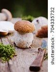 boletus edulis   porcini... | Shutterstock . vector #704335732