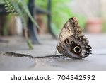 closeup butterfly on flower pn... | Shutterstock . vector #704342992