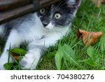 little cat playing in the...   Shutterstock . vector #704380276
