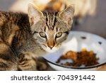 A Kitten Eating